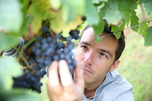 Vigneron A